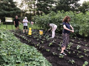 Mitzvah Garden is a Tikkun Olam project providing food for nearby food banks